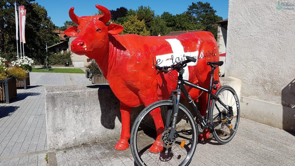 Ginebra en bicicleta  y las vacas