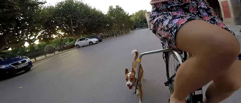 Llevar perro en la bicicleta Trixie Biker Set