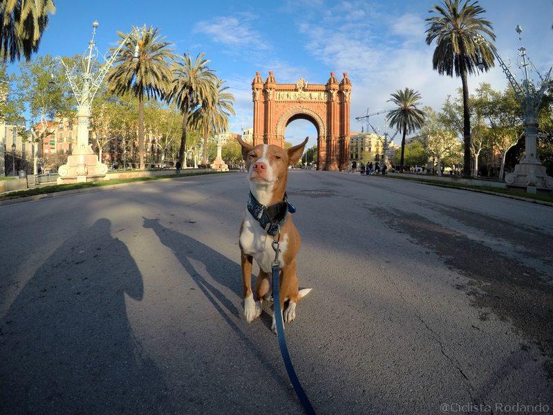 Gopro herp 2018 foto perro barcelona