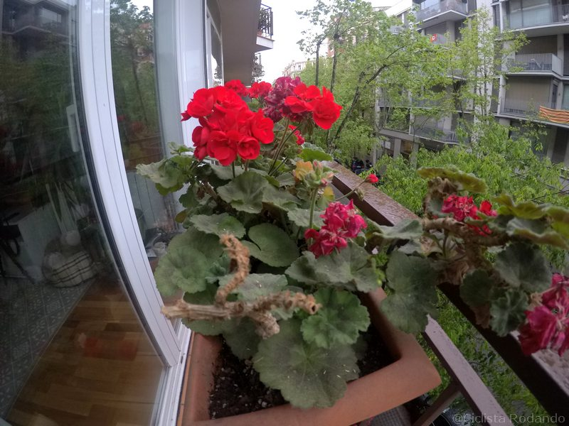Gopro herp 2018 foto plantas